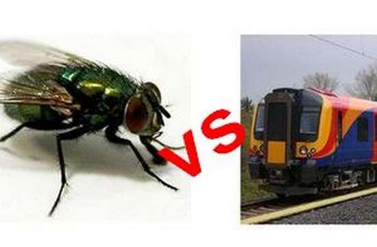 Seekor Lalat yang Menghentikan Kereta